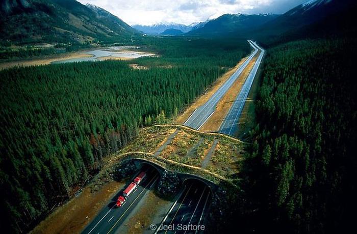 В Вологодской области хотят построить мосты для лосей