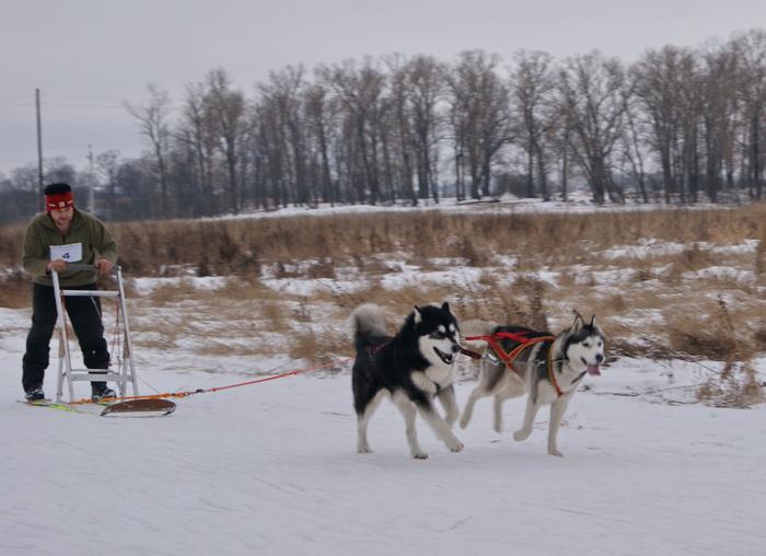 Гонки на собачьих упряжках прошли в Вологде