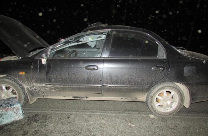 В Шекснинском районе иномарка столкнулась с лосем