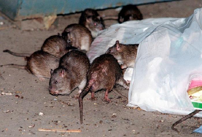 Заключенные колонии в Вологодской области пожаловались на свалку с мухами и крысами
