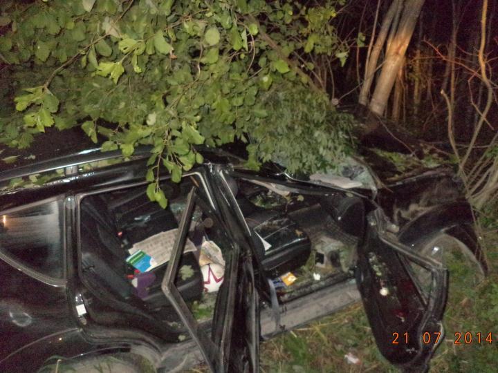 В Череповецком районе в ДТП с лосем погиб водитель