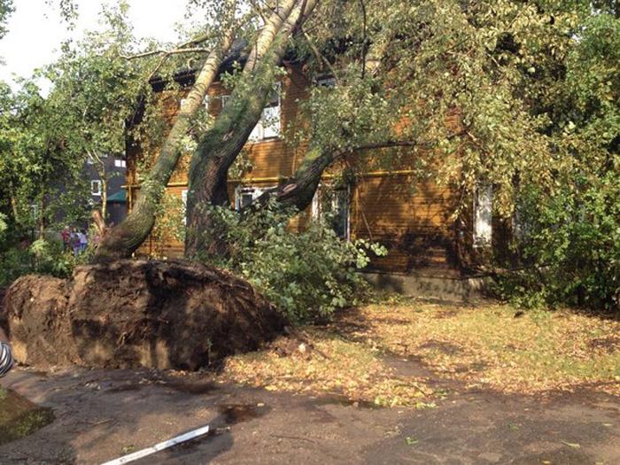 Гроза в Вологде: деревья упали на машины и дома, затоплены улицы