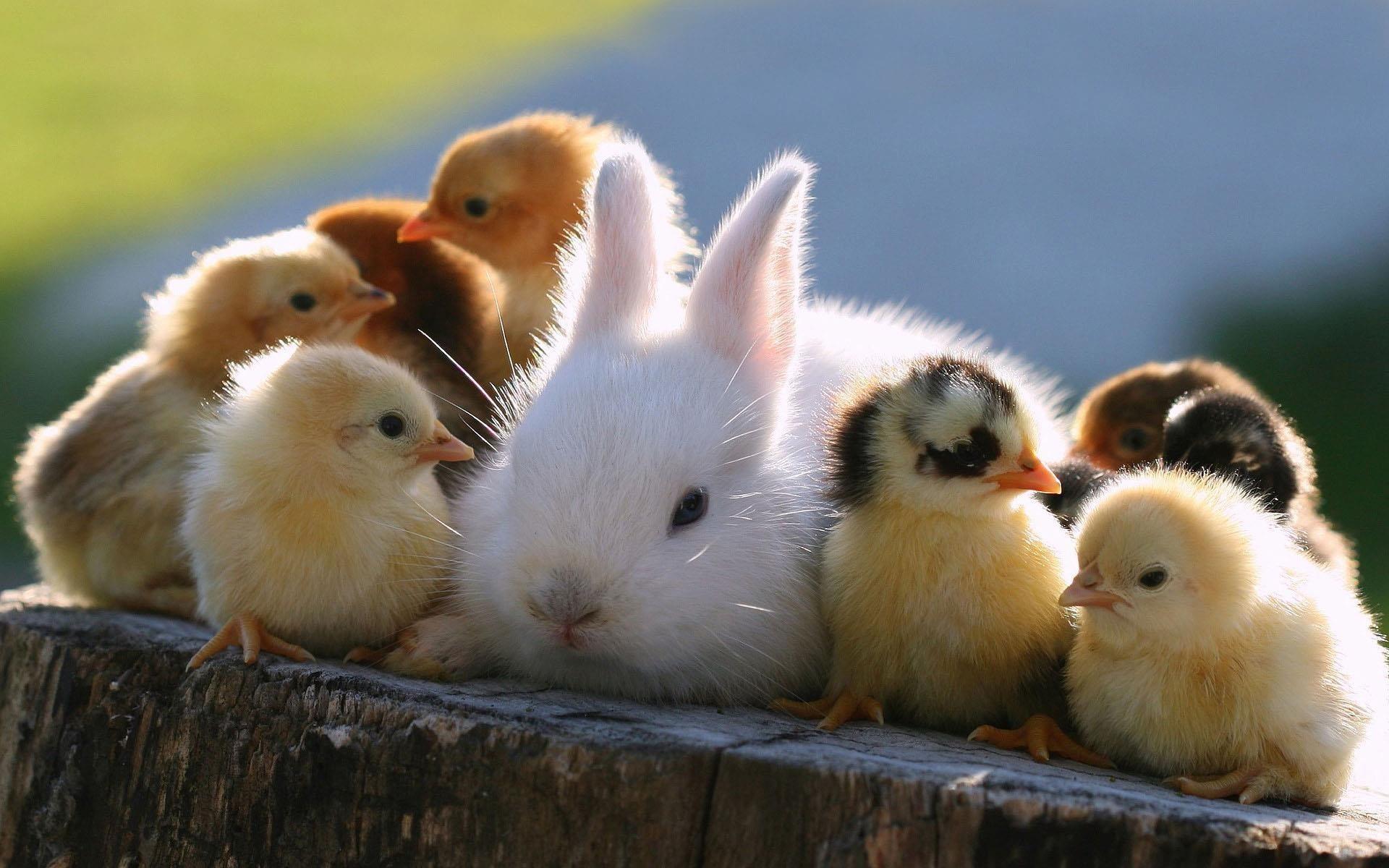 Двое жителей Вологодского района воровали у сельчан кроликов и куриц