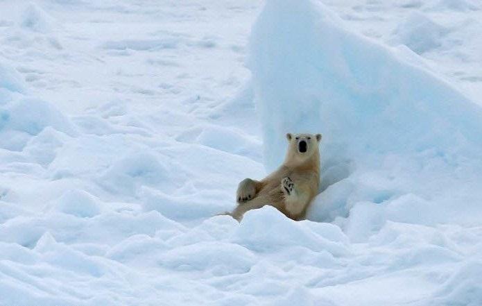 Выставка фотографий Северного полюса открылась в парке Победы в Вологде