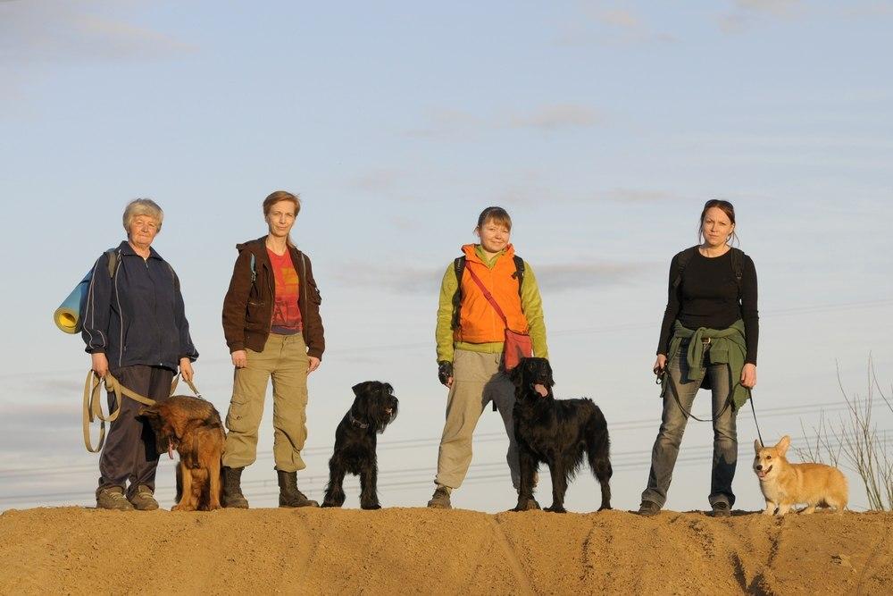 В Череповце собак обучают поиску пропавших людей