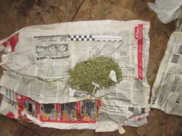 Вологжанин выращивал марихуану на грядке
