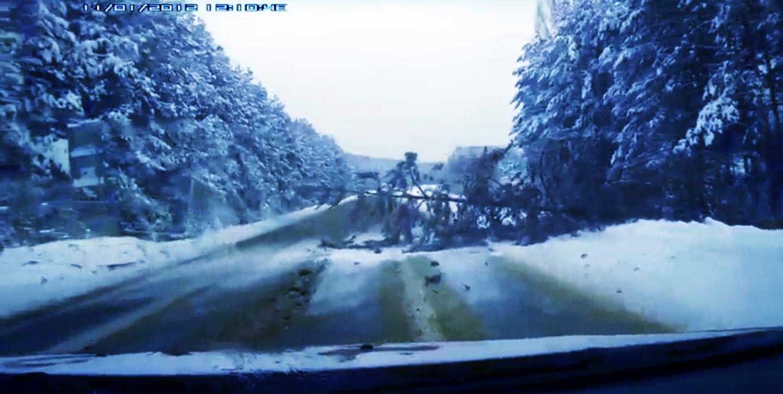 В Кадуйском районе лесорубы случайно повалили дерево на дорогу