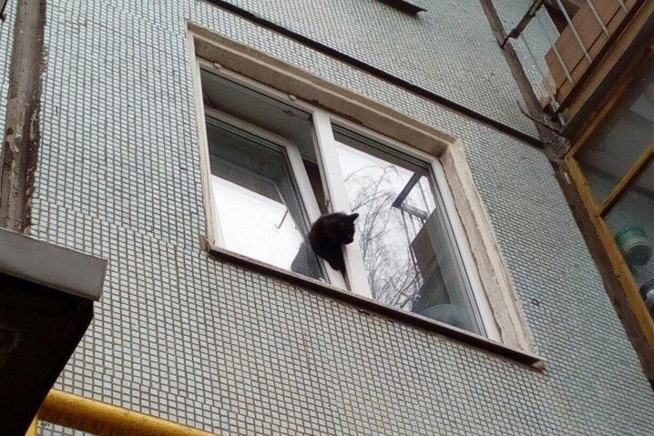 Вологжанин спас кошку, застрявшую в окне, и оплатил ее лечение