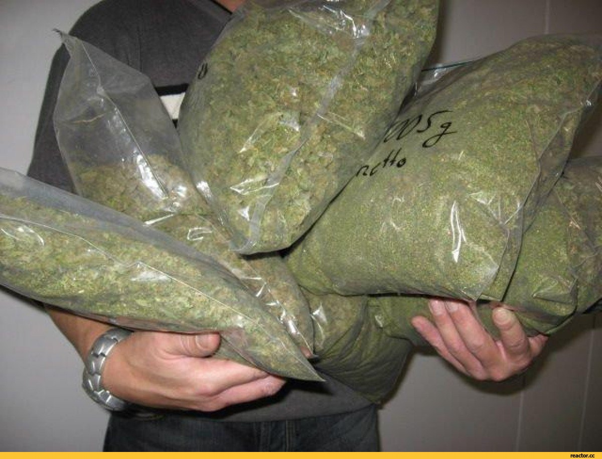 Продавцы конопли марихуана чат