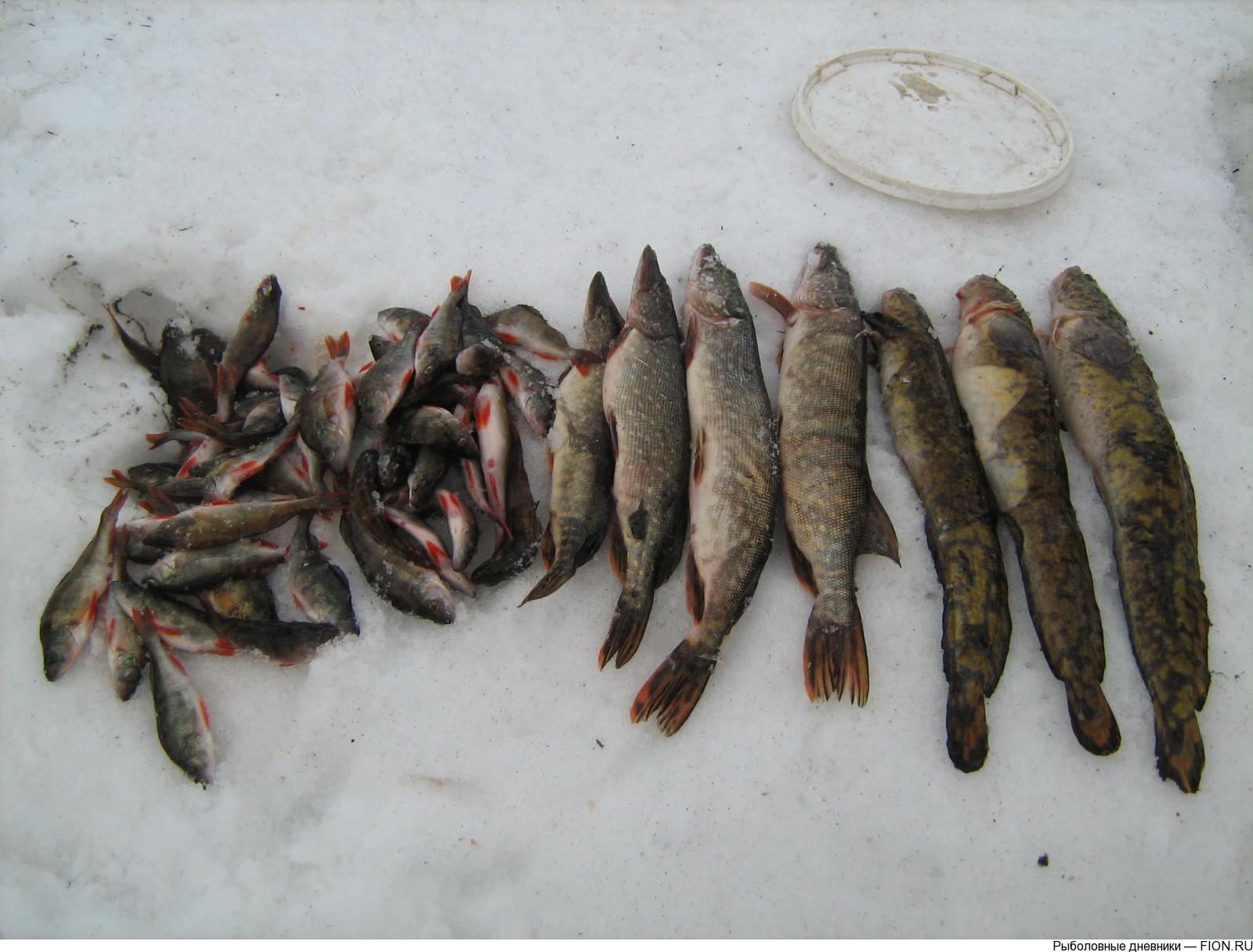 В Череповецком районе обнаружены тела двух пропавших ярославских рыбаков
