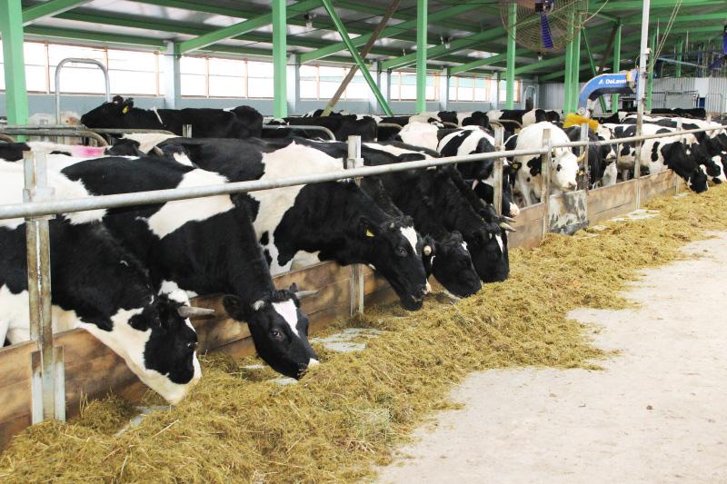 Роботизированную ферму открыли в Грязовецком районе