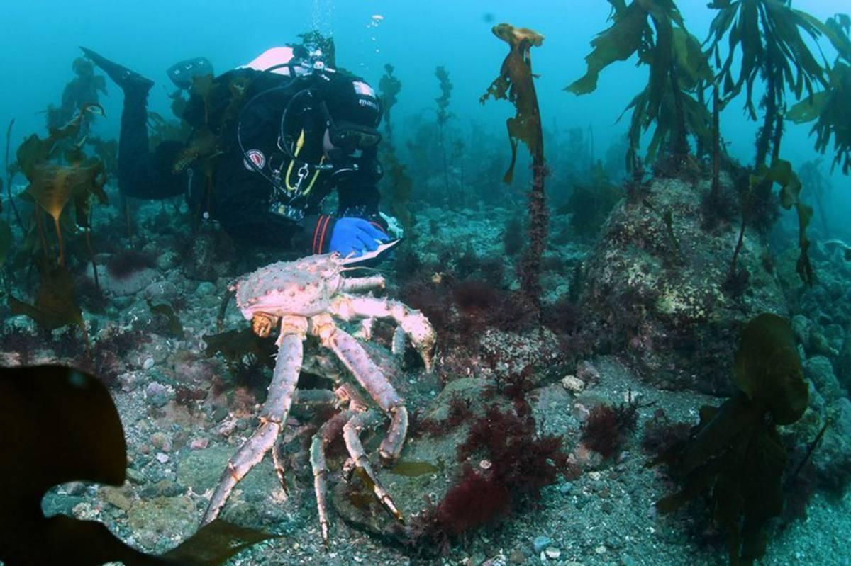 В Череповце открылась выставка фотографий подводного мира