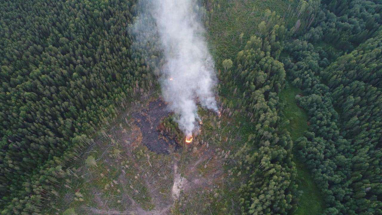 В Вытегорском районе тушат лесной пожар