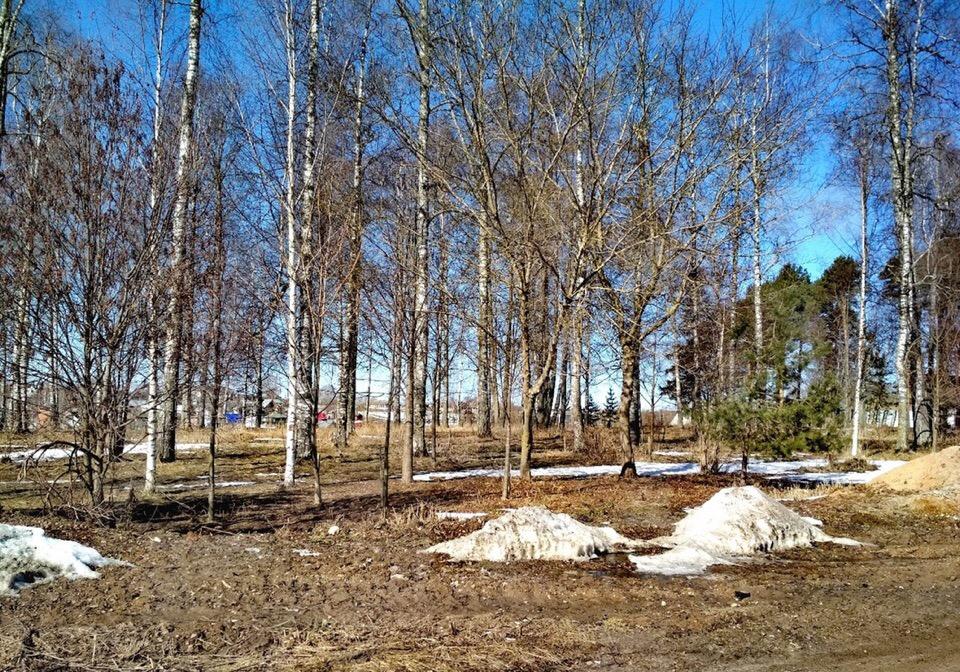 Жители Молочного отстояли зеленую зону в березовой роще, не одобрив строительство там храма