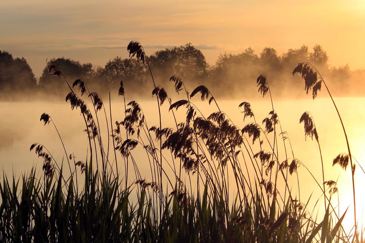 Выставка летних фотовпечатлений «Романтика туманных зорь» открылась вВологде