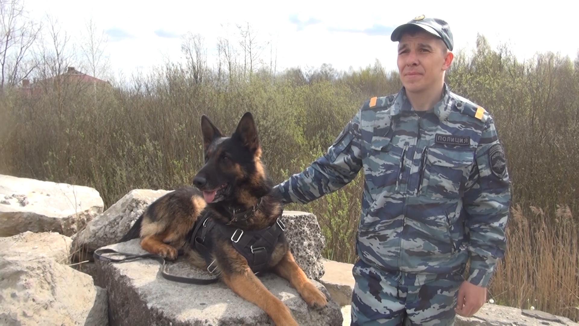В Вологодском районе полицейская собака помогла задержать магазинного грабителя