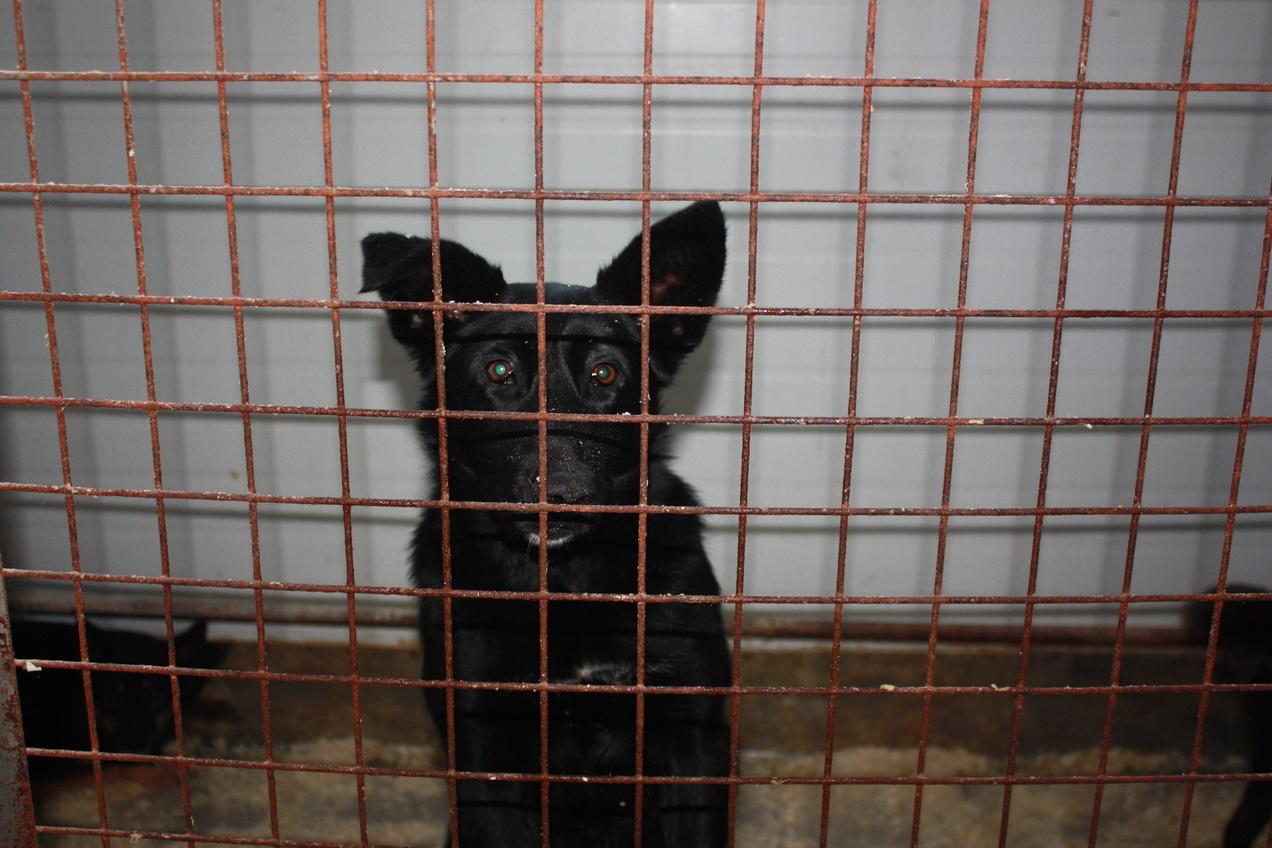 Около 34% всех укусов кошек и собак в Вологде спровоцированы людьми