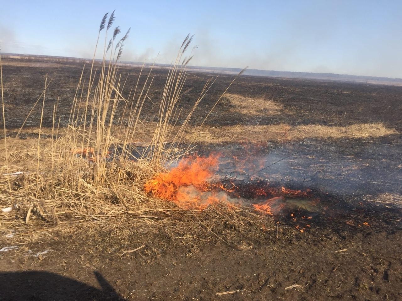 Пять возгораний сухой травы зафиксировали в Вологодской области за сутки