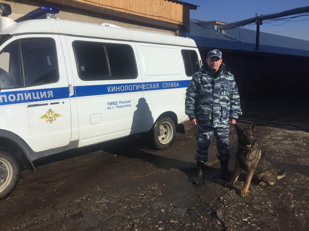 В Череповце полицейская овчарка помогла найти убежавшего из дома 11-летнего мальчика