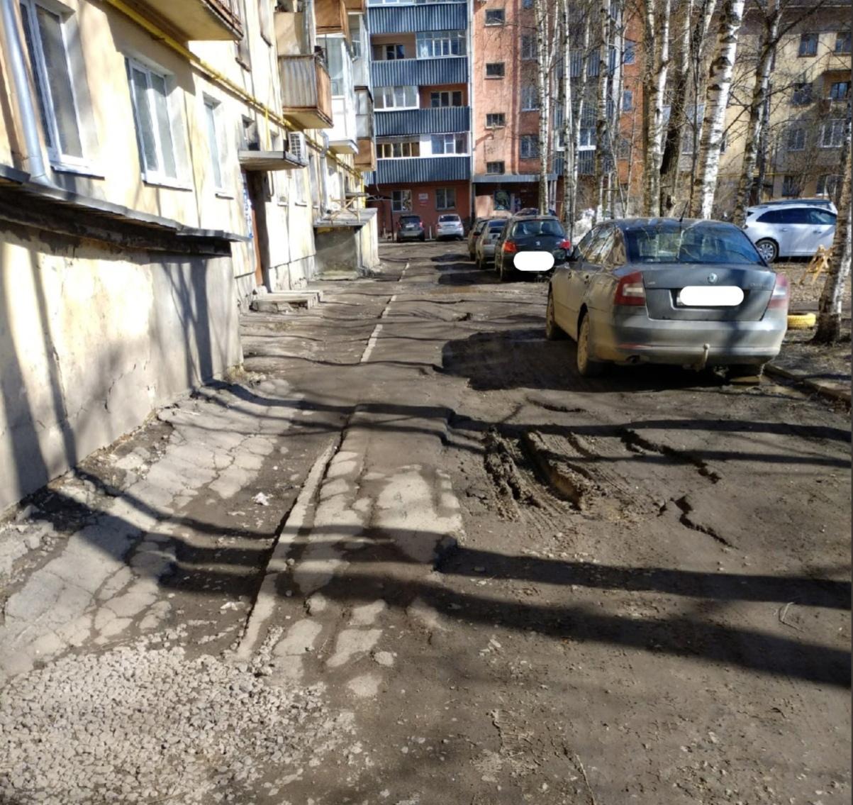Вместо зелени асфальт: в Вологде отремонтируют двор, но вырубят деревья