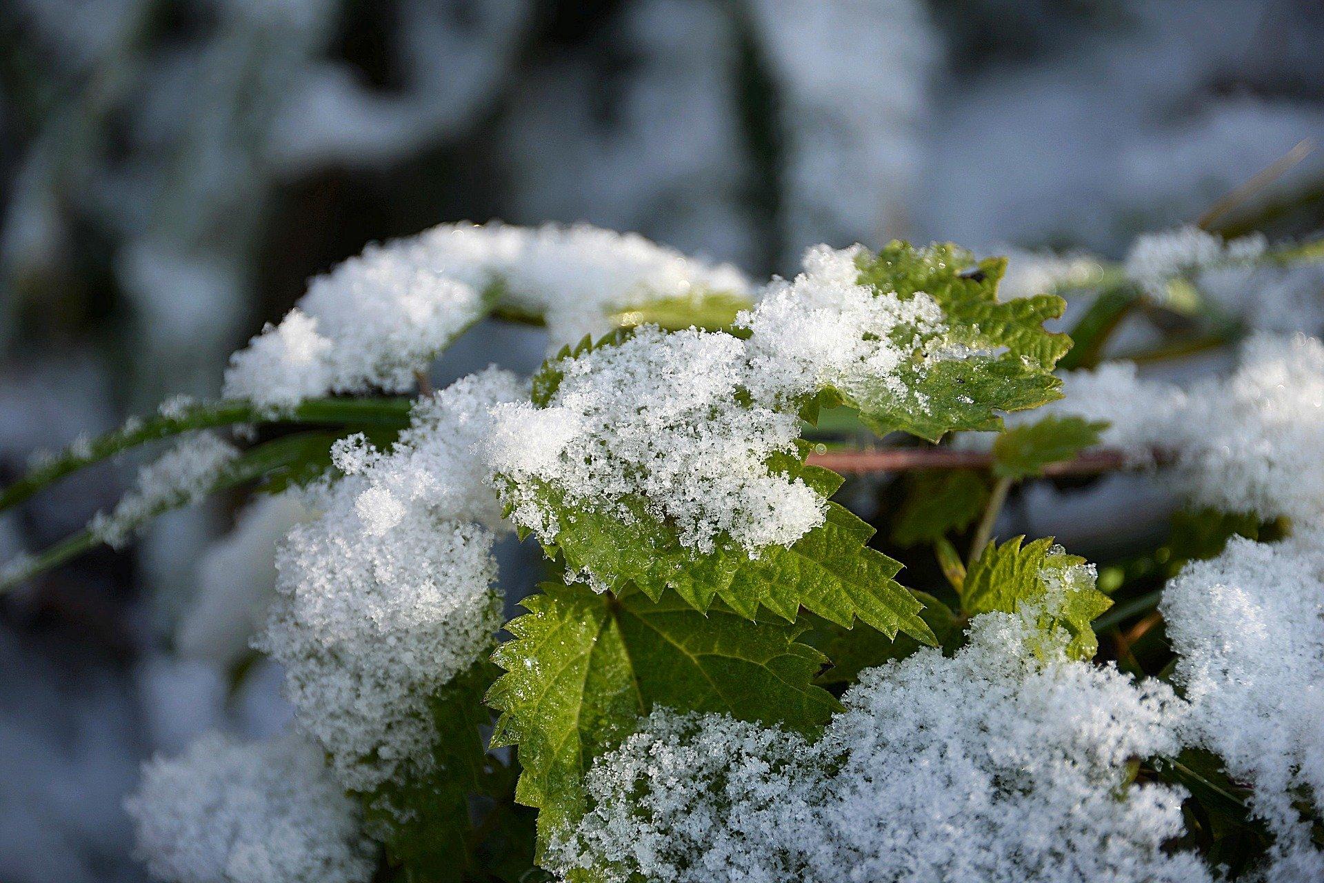Синоптики пообещали снег в начале сентября в Вологодской области
