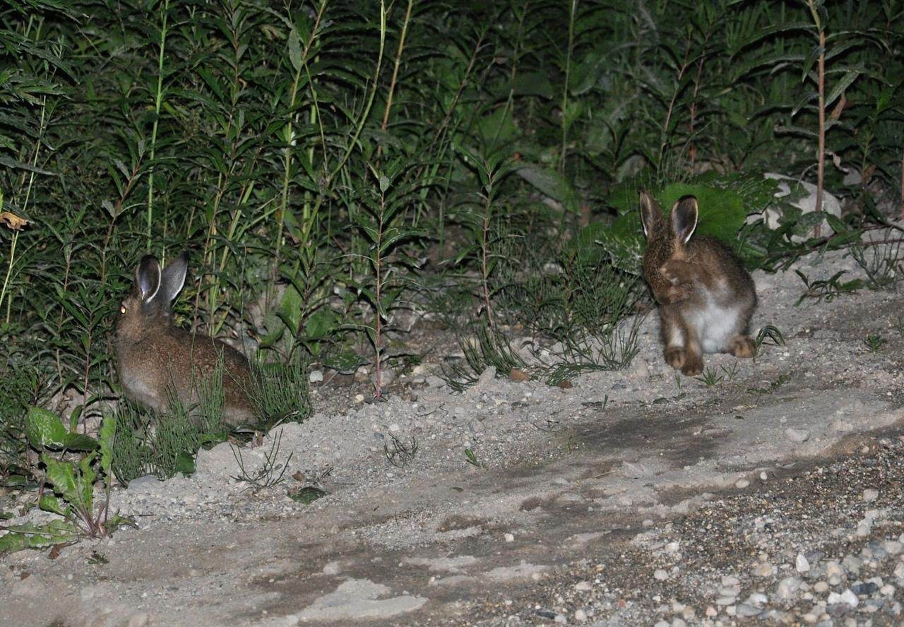 на поляне траву зайцы в полночь косили картинки батончик это готовый