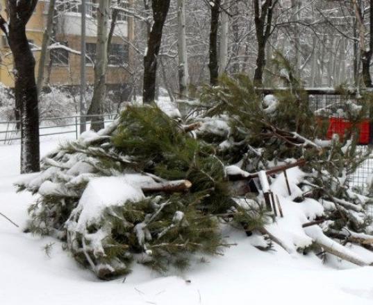 """20 января в """"Вологодской слободе"""" будут принимать оставшиеся после праздников новогодние ели"""