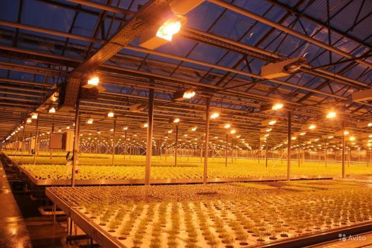 Тепличный комплекс «Новый» под Череповцом откроют на два года позже заявленного срока