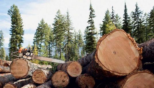 В Великоустюгском районе отстранили от должности главу поселения, разрешившего незаконно вырубить лес