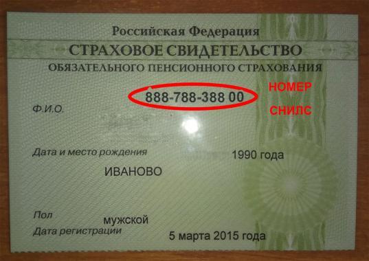 Страховые свидетельства СНИЛС в России станут электронными