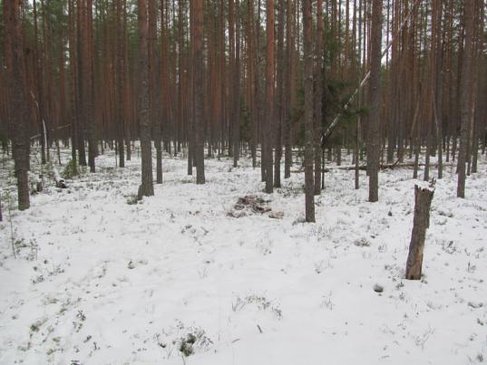 В Чагодощенском районе браконьер заплатил 240 тысяч рублей за убитого лося