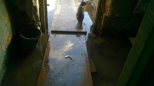 В Череповецком районе управляющую компанию оштрафовали на 10 тысяч рублей за затопленные канализацией подъезды