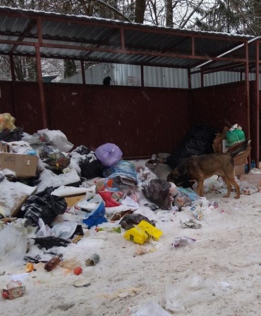 Вологжанам, не желающим тратиться на контейнеры для мусора, предложили его выбрасывать прямо в грузовик