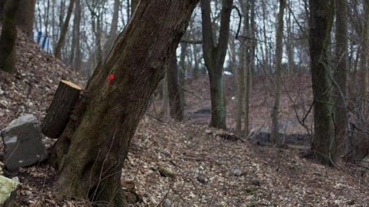 В Бабушкинском районе в лесу нашли тело 45-летней женщины, пропавшей полгода назад
