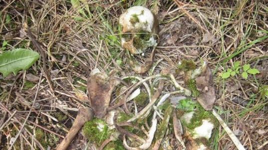 В Бабаевском районе в лесу нашли человеческий череп