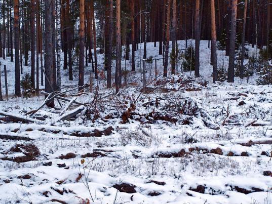 Жители Медуреченского района больше года не могли получить делянки для заготовки дров из-за сотрудников лесхоза
