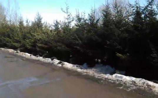 В деревне Бурцево Вологодского района из-за газопровода вырубают 500 деревьев