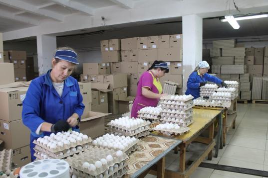 Птицефабрику «Великоустюгская» продали с торгов за 35,1 млн рублей петербургской фирме