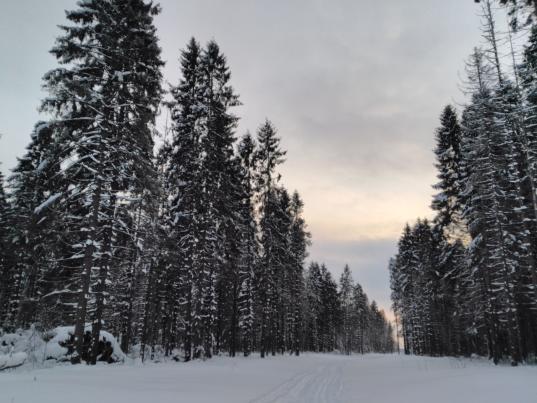 Следователи проводят проверку в мэрии Череповца из-за Пуловского леса