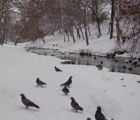 В центре Вологды появится площадка для выгула собак