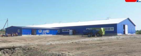 В Вожегодском районе открыли новую ферму