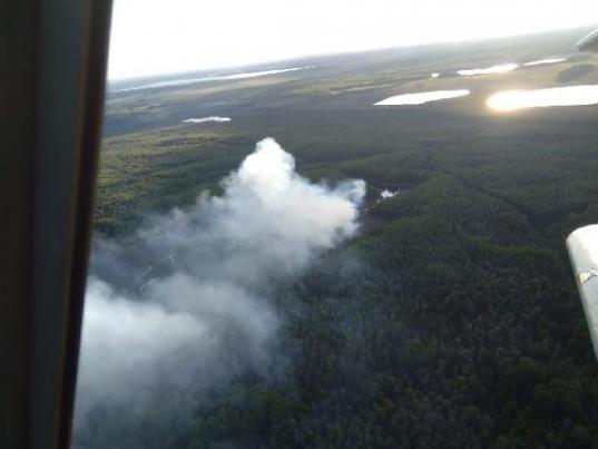 В Белозерском районе тушат лесной пожар на площади 1,6 гектара
