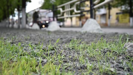 В Вологде «Магистраль» досеивает траву на газонах по гарантии