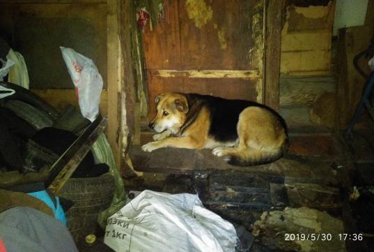 На вологжанина, собаки которого напали на женщину в Западном переулке, составили протокол