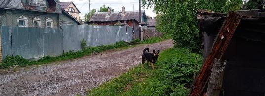 «За детей страшно»: в Вологде бездомные собаки покусали женщину