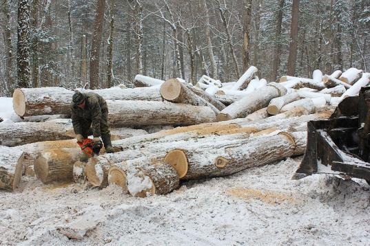 Ущерб лесу, причиненный преступлениями в Вологодской области в 2018 году, возместили лишь на 50%