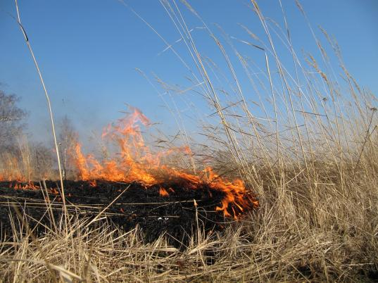 До 15 мая в Вологодской области установлен особый противопожарный режим