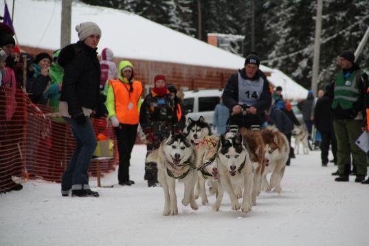 Гонки на собачьих упряжках пройдут в Тотьме 12 и 13 января