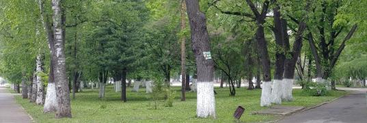 «Снежных валов не обнаружено»: в Вологде чиновники в мае проверили работу «Магистрали» по жалобе на снег