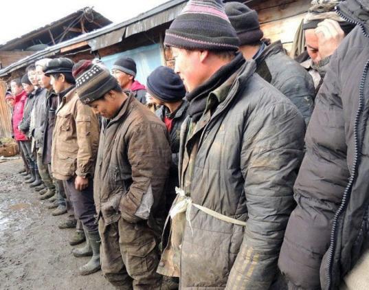 На сельхозпредприятии в Вологодском районе нелегально работали мигранты